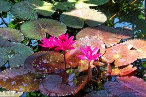 flowerphoto